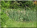 NZ3071 : Restricted Pond by Christine Westerback