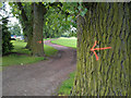 SK4833 : Poplars with arrows by David Lally