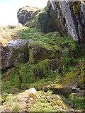 NG9778 : Mountain spring by Sally
