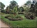 TQ2876 : Sub Tropical Garden, Battersea Park by Paul Gillett