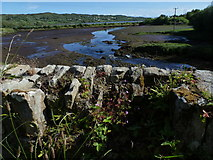 G7278 : The Lough Head - Killybegs by louise price
