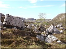 NH0079 : Rowan in boulders by Sally