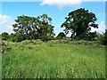 SU1586 : Pickard's Small Field, Gorse Hill, Swindon (2) by Brian Robert Marshall