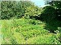 SU1586 : Pickard's Small Field, Gorse Hill, Swindon (7) by Brian Robert Marshall