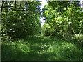 TL1770 : Track in Brampton Wood by JThomas
