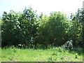 TL1568 : Woodland near Grafham Water by JThomas