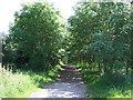 TL1568 : Path near near Grafham Water by JThomas