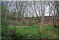 TQ8932 : Ratsbury Wood by N Chadwick