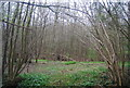TQ8931 : Ratsbury Wood by N Chadwick