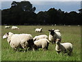 TQ1150 : Grassy Shaw by Colin Smith