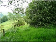 SE0421 : Holly tree on line of footpath by Humphrey Bolton