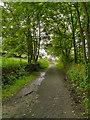 SJ9999 : Pennine Bridleway, Brushes by David Dixon