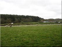 SO0153 : Dolyrerw Farm by David Purchase