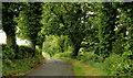 J3860 : The Craigy Road near Saintfield by Albert Bridge