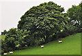 J3860 : Hedge and drumlin near Saintfield by Albert Bridge