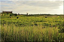 TG0444 : Cley windmill, from Beach Road, Cley next the Sea by Julian Dowse