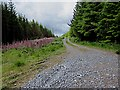 R9721 : Forest Track and Foxgloves by kevin higgins