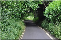 ST5038 : Glastonbury : Wellhouse Lane by Lewis Clarke