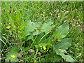 SO0291 : Wild flowers and grasses by Penny Mayes