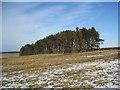 NY9578 : Throckrington Crags Plantation by Les Hull
