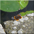 TL8408 : Red Admiral by Roger Jones