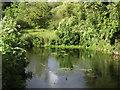 SU6652 : Fish Pond by Colin Smith