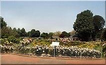 TQ3005 : Scented Rose Garden by Paul Gillett