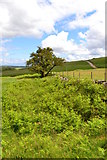 SK2073 : Hawthorn tree above Blakedon Hollow by Neil Theasby