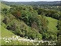 TQ2051 : Brockham Hills, North Downs by Colin Smith