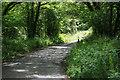 SX0060 : Narrow Cornish lane by roger geach