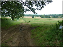 SU7824 : Fallow field west of the Sussex Border Path by Dave Spicer