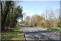 TQ5639 : Langton Rd by N Chadwick