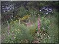NJ8207 : Summer wild flowers by Stanley Howe