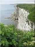 TA1974 : Clifftop vegetation by Pauline E