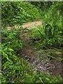 SX8966 : Streams merging, The Willows by Derek Harper