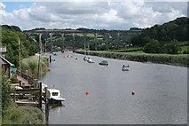 SX4268 : Calstock: the Tamar near Danescombe Quay by Martin Bodman