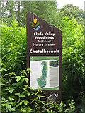 NS7354 : Clyde Valley Woodlands NNR by M J Richardson