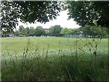 TQ3084 : View between trees at Paradise Park by David Martin
