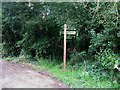 TQ2038 : Footpath 1498 east from Waffles Corner on Capel Road by Dave Spicer
