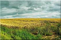 SU2991 : A view up Barrowbush Hill, south of Fernham by Brian Robert Marshall