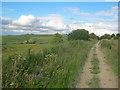 SU0367 : Wessex Ridgeway on Morgan's Hill by Trevor Rickard