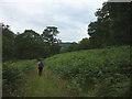 SD4191 : Footpath through Lambhowe Plantation by Karl and Ali