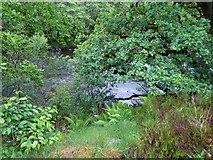 NH3716 : River through trees by James Allan