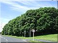 NZ2989 : Woodland, Woodhorn by JThomas