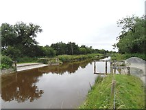 N3025 : Cattle Ford on Grand Canal, Killiskea, Co. Offaly by JP