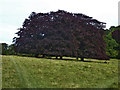 SP9310 : Copper Beeches, Tring Park by Rob Farrow