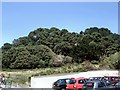 SZ0790 : Trees at Durley Chine by Paul Gillett