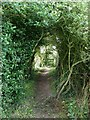 SP9310 : Ridgeway natural tunnel by Rob Farrow