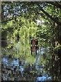 SX8274 : Pond at Trago Mills by Derek Harper