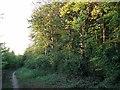 TL4854 : The Beechwoods: evening light by John Sutton